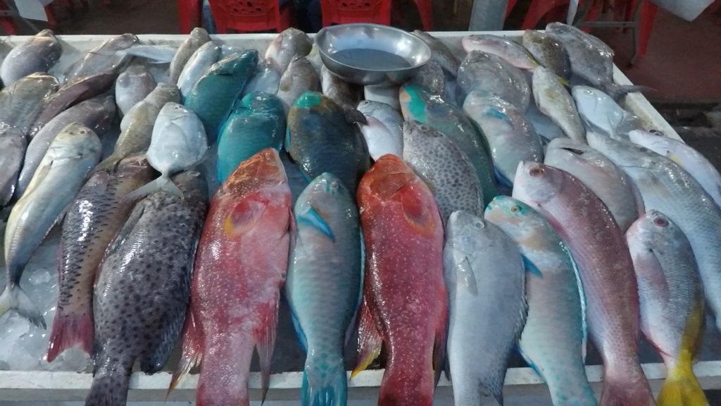 珍しい色の魚が並ぶ