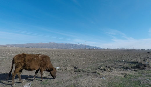 サマルカンドからペンジケントへ 中央アジア陸路国境越え