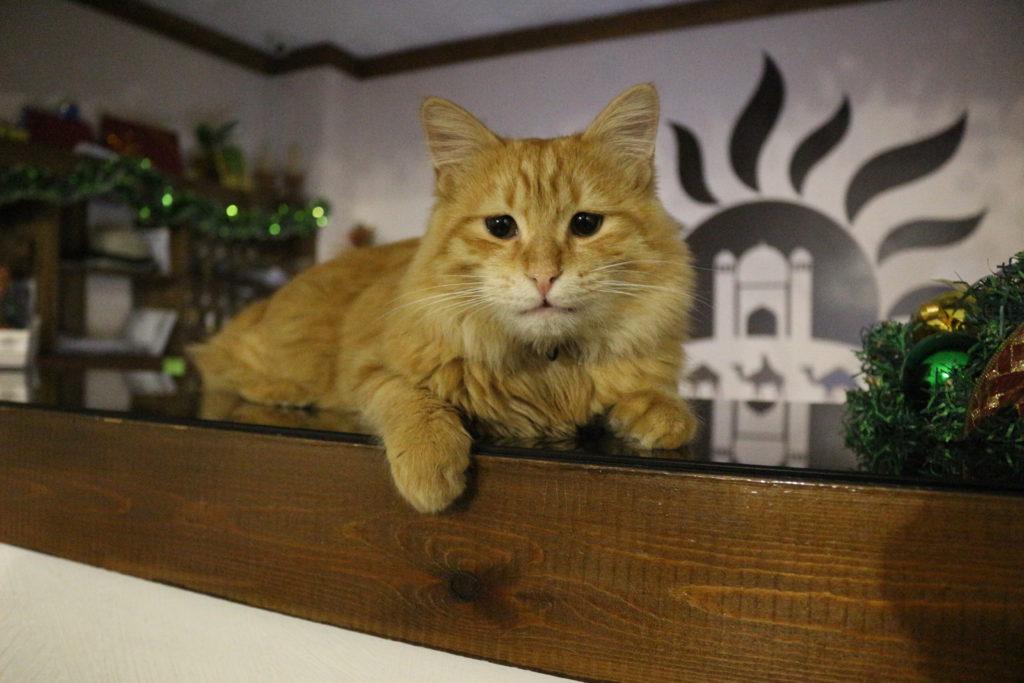宿の飼い猫