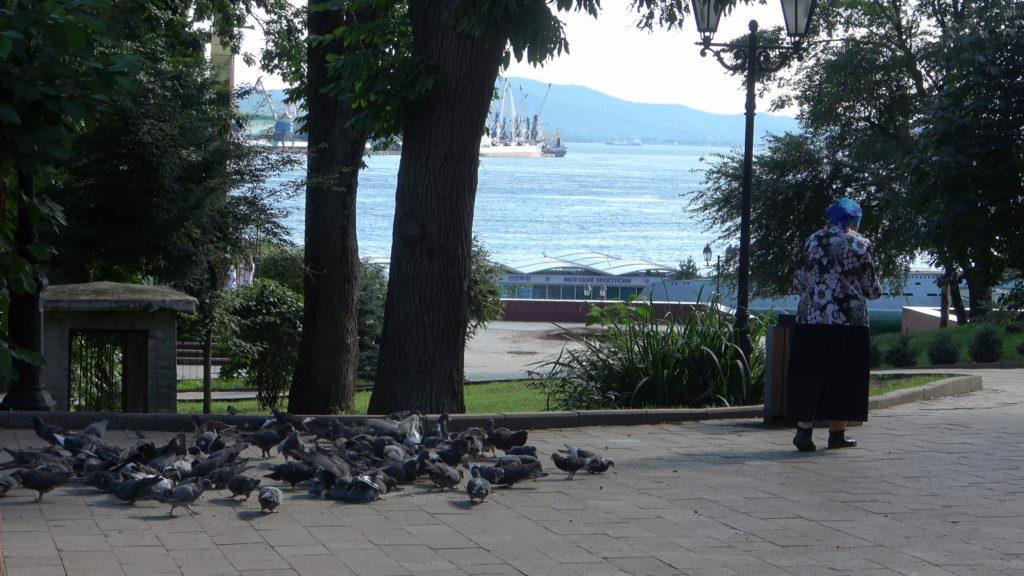 公園にいた鳩使いのおばさん